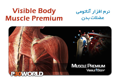 Visible-Body-Muscle-Premium